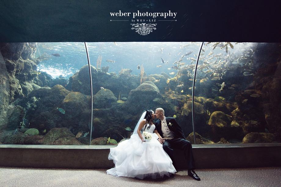 Florida Aquarium Wedding Tampa Wedding Photographer