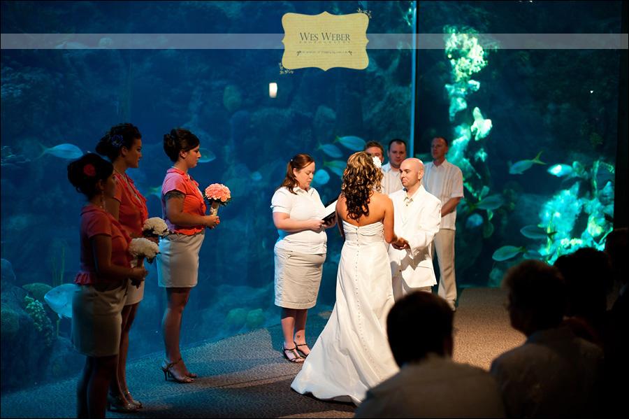 Florida Beach Wedding With Aquarium Reception: Tampa Wedding Photographer